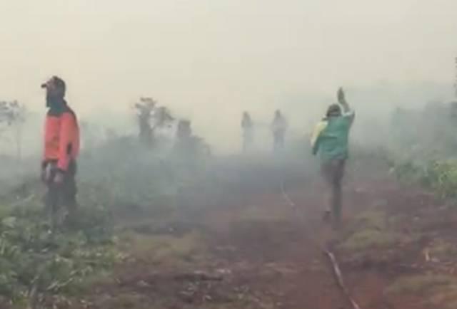 Sepekan, 66 Hektare Hutan dan Lahan di Riau Hangus Terbakar