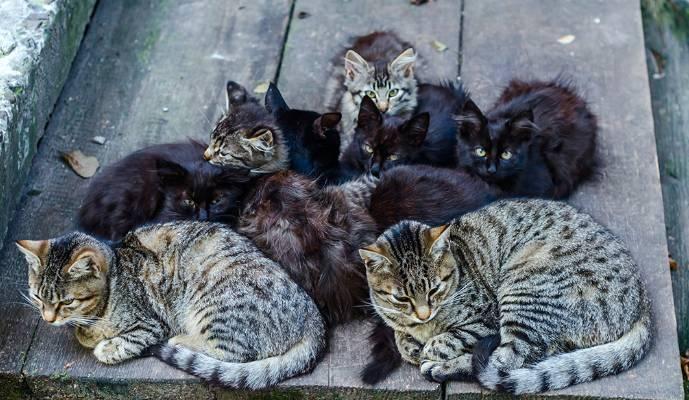 Terduga Pelaku Jagal Kucing Diamankan Polisi, Potongan Tubuh Kucing Ditemukan di Rumahnya