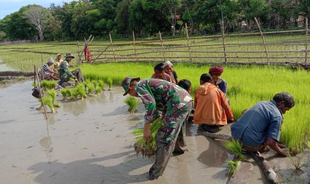 Satgas Yonif 132/BS, Jalin Kebersamaan Dengan Masyarakat Perbatasan wujudkan Swasembada pangan.