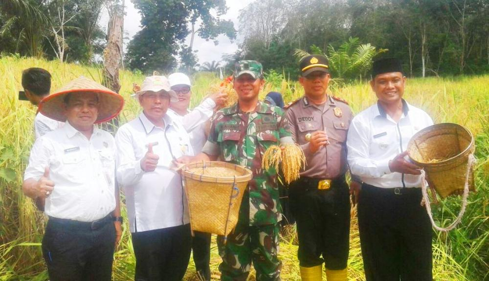 TNI POLRI Bersinergi Bantu Petani Panen Padi Gogo