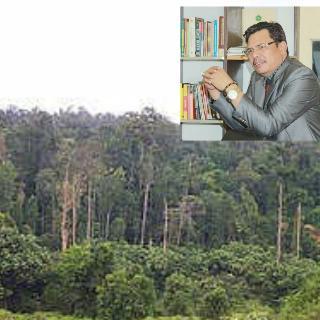 Apul Sihombing, SH. MH : Bupati Pelalawan Harus Bertanggung Jawab Terkait Tapal Batas TNTN