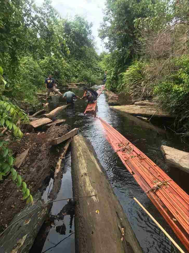 Sat ResKrim Polres Bengkalis Amankan  Dua Orang Diduga Pelaku Ilegal Logging