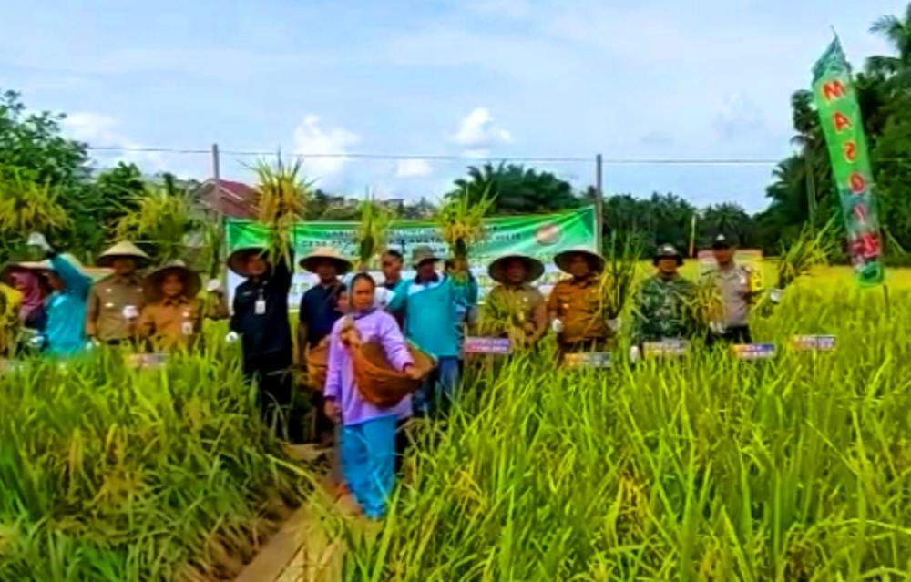 Kemanunggalan TNI, Babinsa Bantu Petani Panen Padi di Desa Pasir Jaya