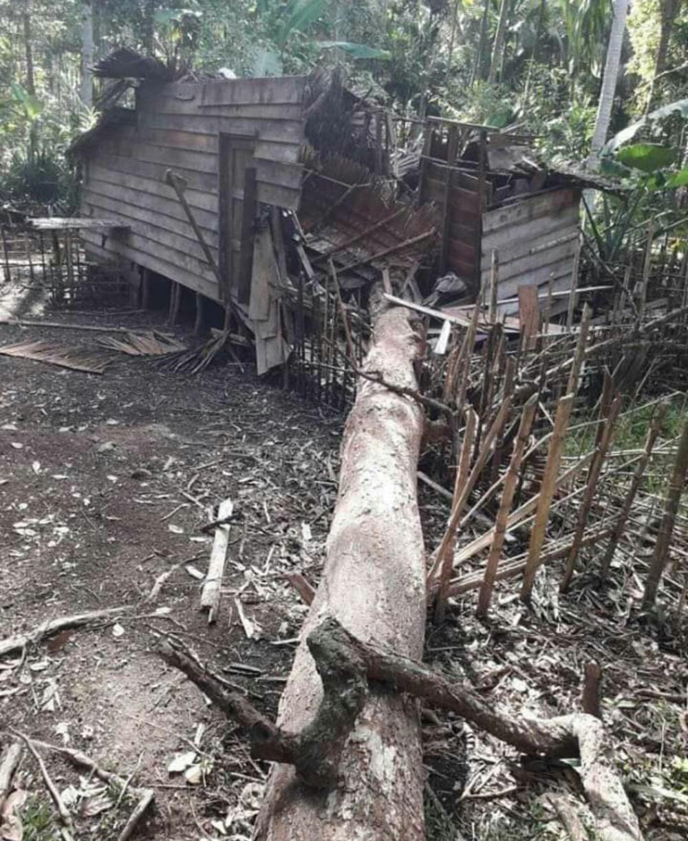 Hidup Sebatang Kara, Rumah Kohir Hancur setelah Tertimpa Pohon Besar di Kecamatan Kempas