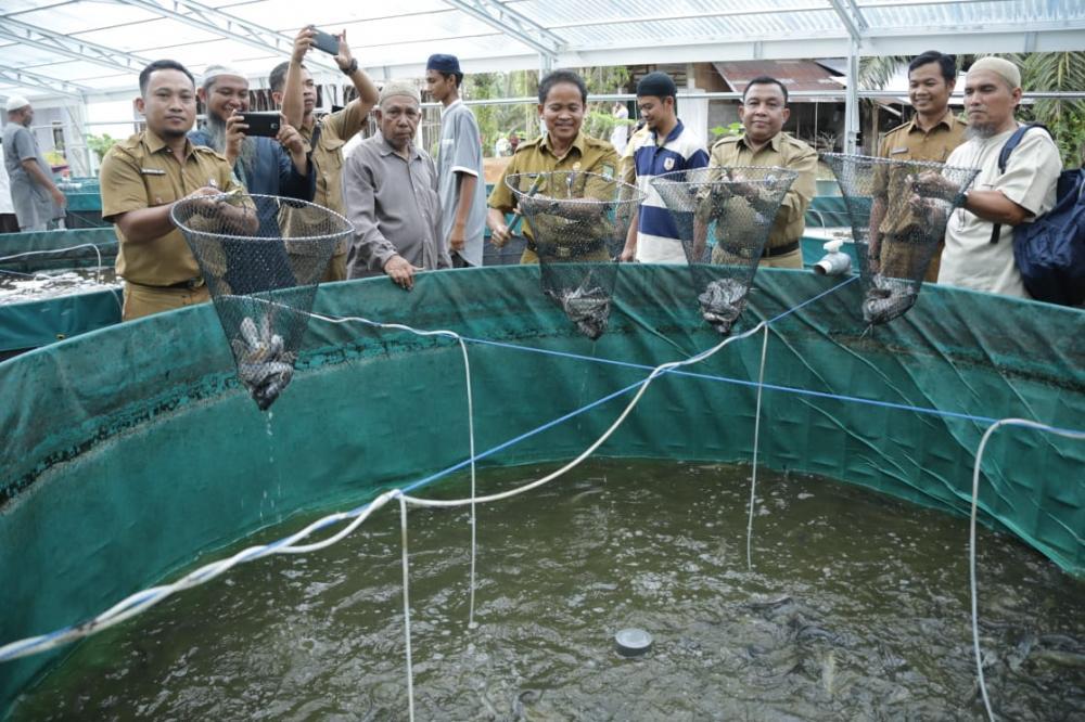 Panen Raya Ikan Lele Sistem Bioflok di Kecamatan Rambah