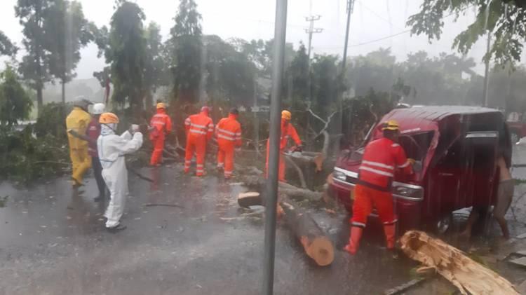 Sigap! Personel Polres Banjar Sinergi dengan BPBD Kota Banjar Evakuasi Pohon Tumbang di Dua Lokasi Berbeda