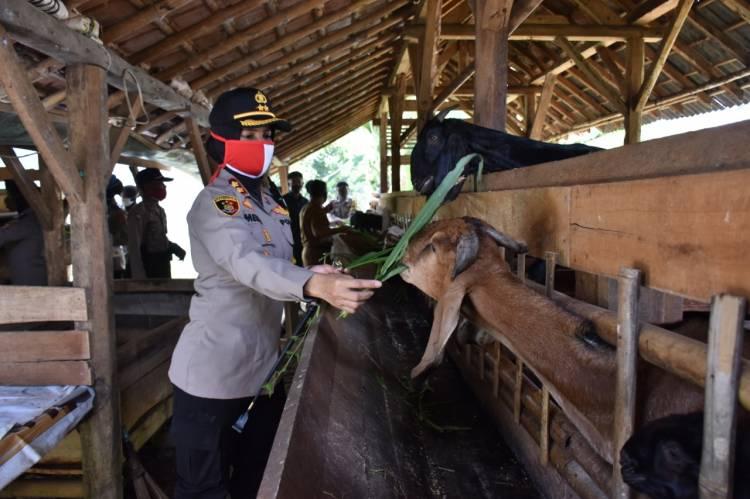 Kapolres Banjar Cek Lokasi Peternakan Sapi dan Kambing