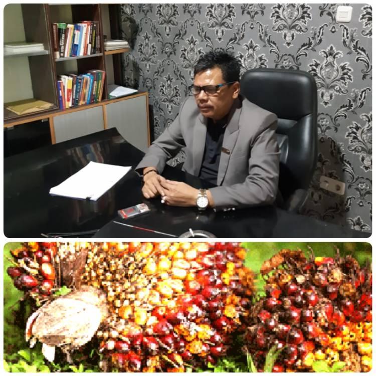 Praktisi Hukum Apul Sihombing, SH. MH berikan Apresiasi Khusus kepada Kapolda Riau dalam Penanganan Perkara Pencurian Tiga Tandan Sawit