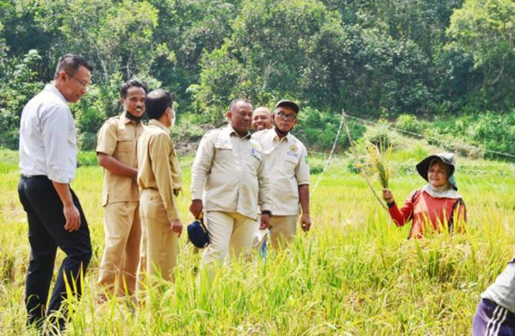 Ketua KTNA Propinsi Riau Drs.Yusri M.Si Meninjau Persiapan Panen Padi dan Pepaya Madu di Desa Pulau Birandang