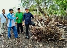 Abrasi Ancam Tenggelamkan Pulau Bengkalis