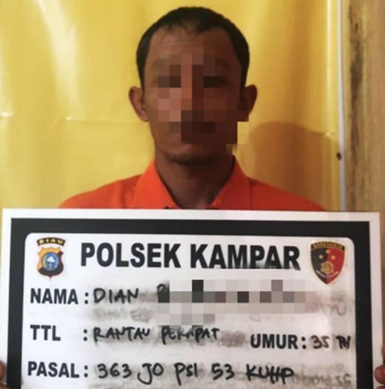 Pencuri Buah Sawit Milik CV. Makmur Jaya Sentosa Tertangkap Tangan oleh Karyawan Perusahaan