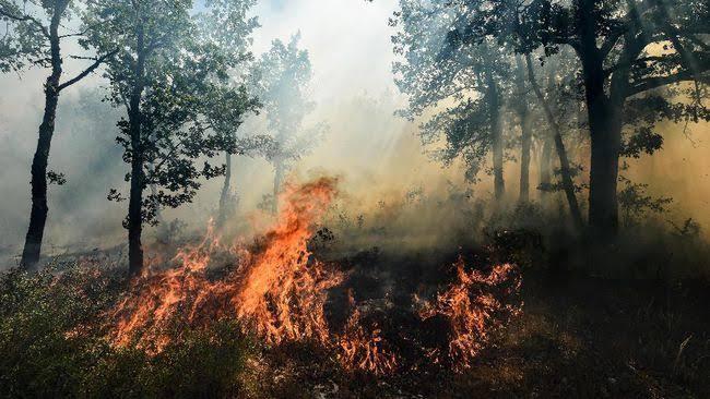 Polres Inhil Ada Potensi Dari Korporasi Tersangka Tentang Kebakaran Lahan Dan Hutan (Karlahut)
