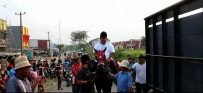 Wow, Calon Kepala Desa Ini Menunggangi Kuda Seharga Rp 2 Miliar Asal Belanda
