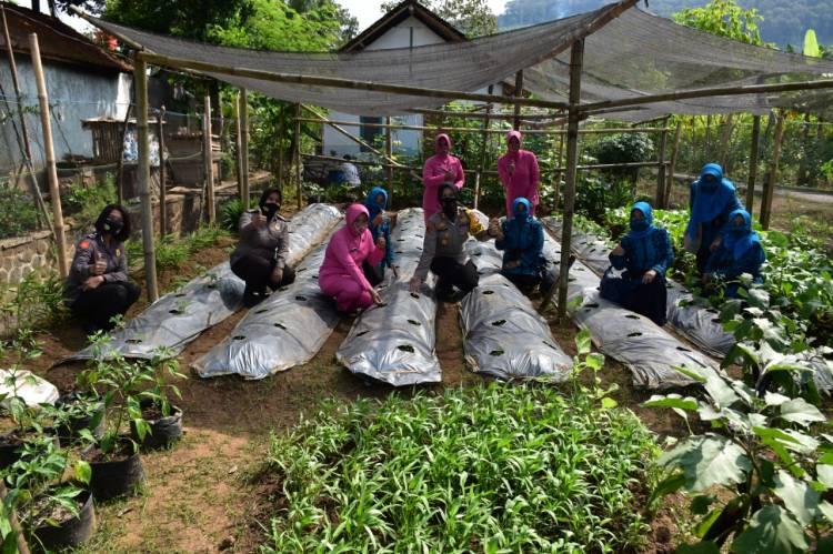 Kapolres Banjar Bersama Personil Polwan dan Bhayangkari Safari Ke Perkebunan KWT dan UMKM Desa Raharja