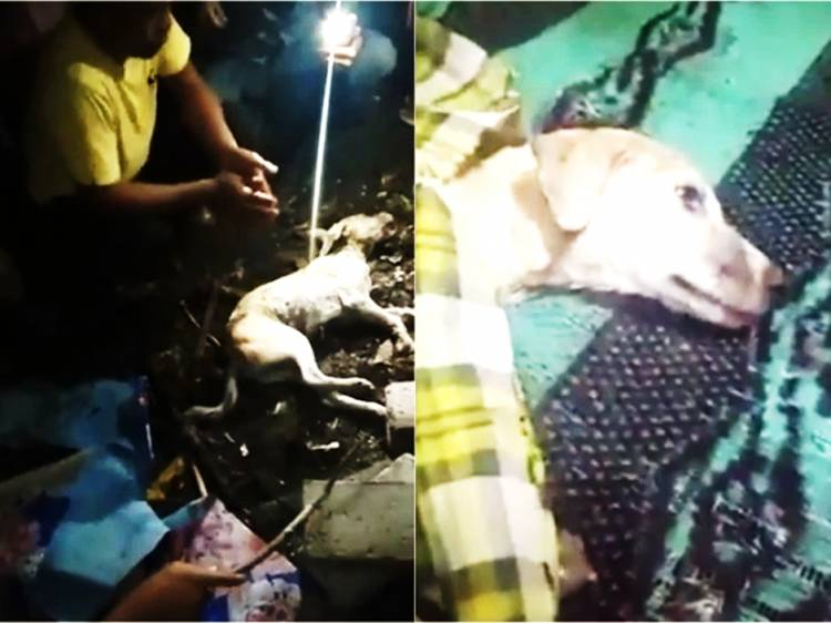 Rumor Pelajar SMP Berubah Jadi Anjing lalu Dikubur Hidup-hidup Disesali Pencinta Hewan