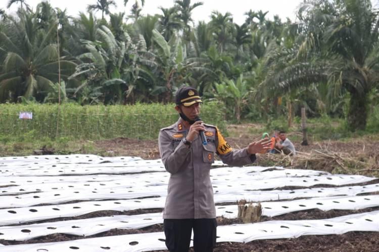 Kapolres Inhil Implementasikan Program Riau Jaga Kampung dengan Menanam Palawija
