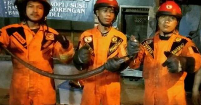 Ular Kobra Hitam Ditemukan di Bawah Tempat Tidur