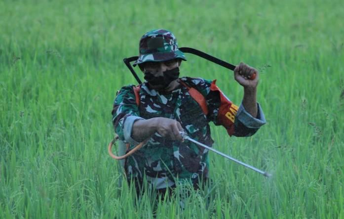 TNI-POLRI Langsa Bersinergi Bersama Petani Perkuat Ketahanan Pangan