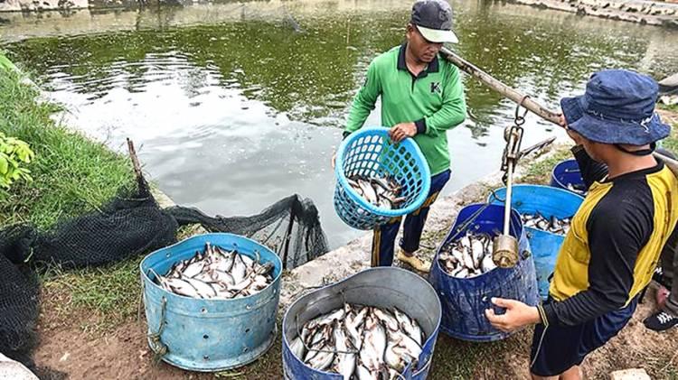 Desa Koto Mesjid Kec. XIII Koto Kampar: Diversifikasi Sentra Produksi Ikan Patin ke Sektor Pariwisata