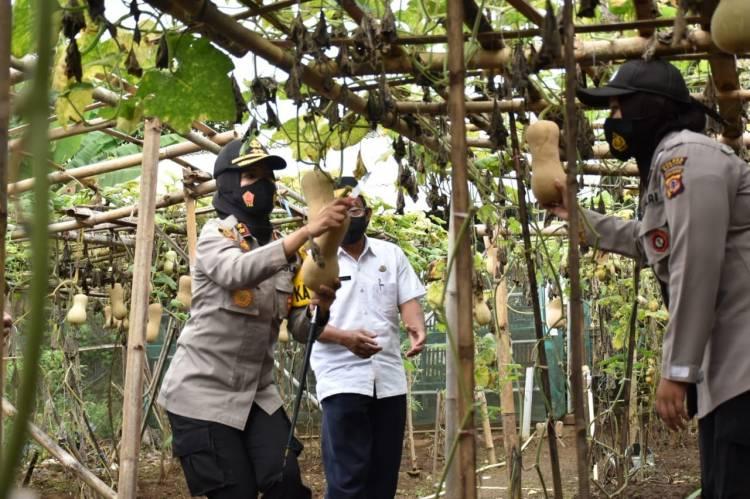 Kapolres Banjar Panen Labu Madu di KWT 4 Desa Mekarharja, Jawa Barat