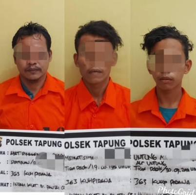 Polsek Tapung Amankan 3 Terduga Pelaku Pencurian TBS Milik PTPN-V Kebun Sei Garo