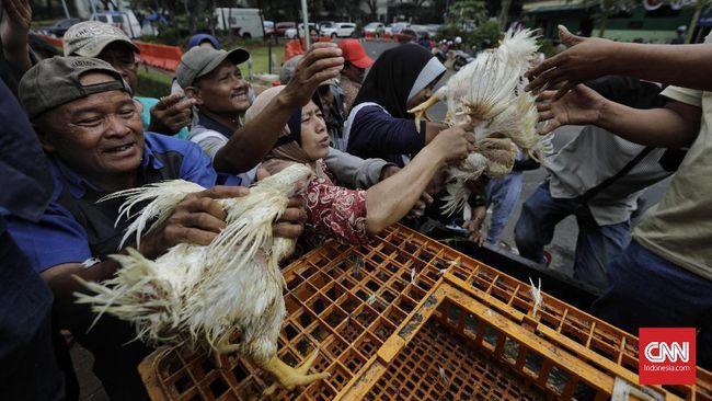 Kepala Staf Kepresidenan Moeldoko Usulkan Agar Setiap Keluarga Memelihara Satu Ekor Ayam