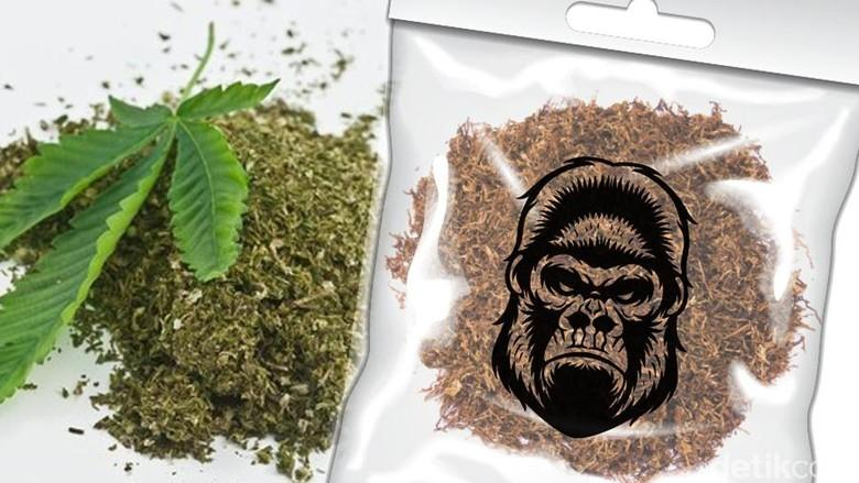 3 Pelajar Ditemukan Dalam Kondisi Pingsan, Diduga Mengkomsumsi Narkotika  Jenis Tembakau Gorilla
