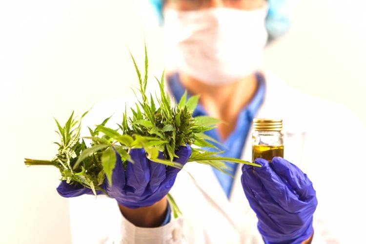 PBB Resmi Hapus Ganja dari Daftar Obat Berbahaya