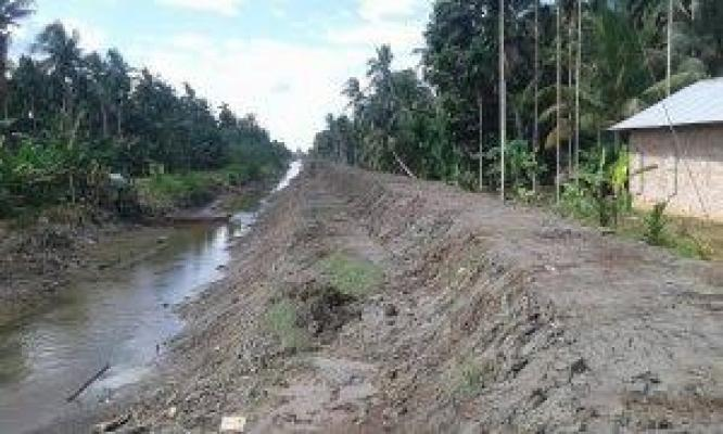 DPRD Inhil Targetkan Penyelamatan 12.500 Hektare Kebun Kelapa Rakyat