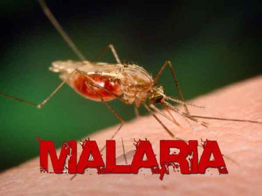 Pemprov Programkan Wajib Kelambu untuk Cegah Malaria
