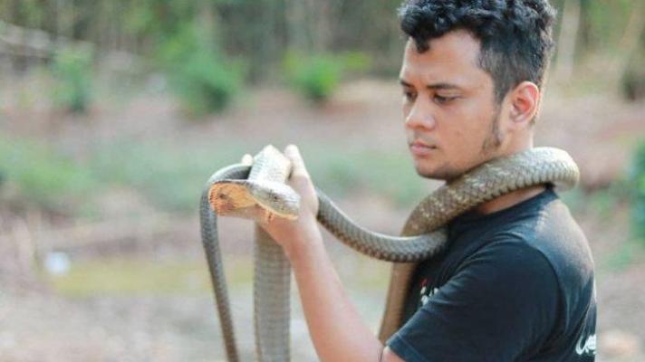 Panji Petualang Tanggapi Ular King Cobra di Kapuas yang Tak Bergerak Selama 4 Tahun